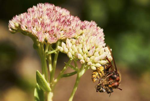 death garden hornet