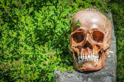 death  die  skeleton