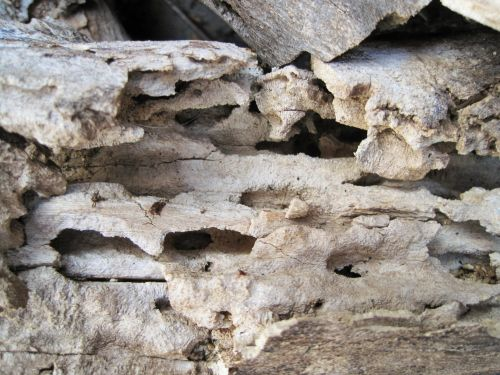Decay On A Piece Of Wood