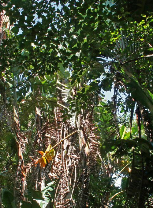 Decaying Tropical Vegetation
