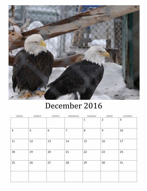 December 2016 Calendar Of Birds