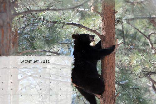 December 2016 Calendar With Bear
