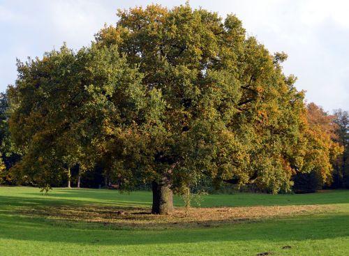deciduous tree tribe aesthetic