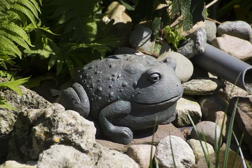 deco  frog  cute
