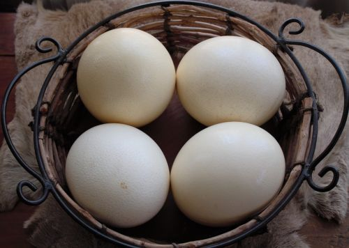decor display ostrich eggs