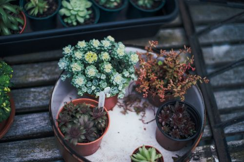 decoration decorative plants flora