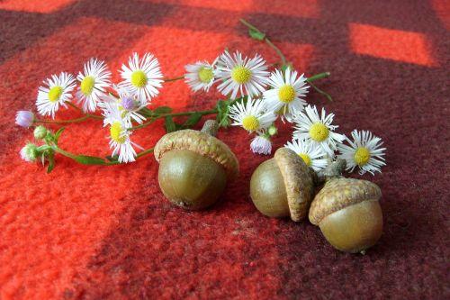 decoration nature composition
