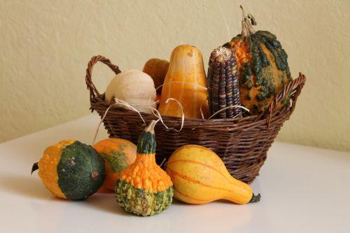 decorative squashes pumpkin crop