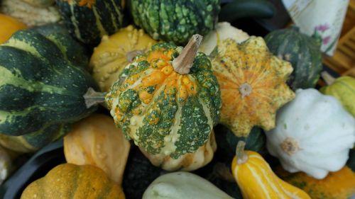 decorative squashes pumpkins green