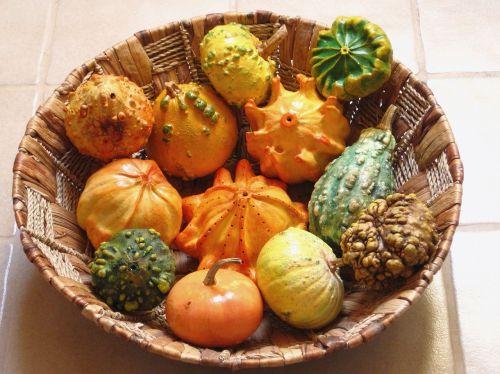 decorative squashes pumpkins dried
