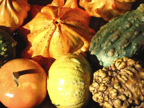 decorative squashes pumpkins autumn