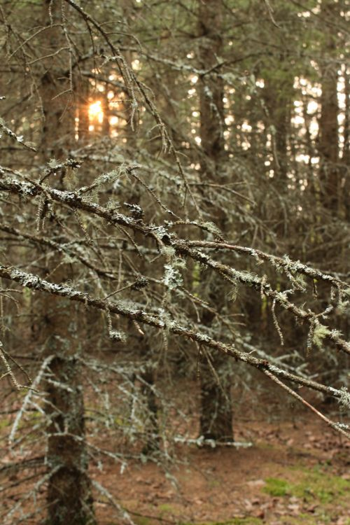 Deep Dark Forest Branches