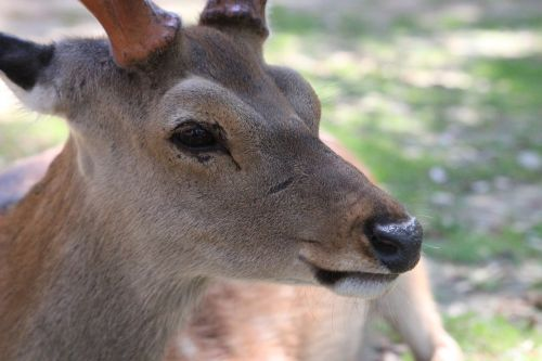deer animal mammal
