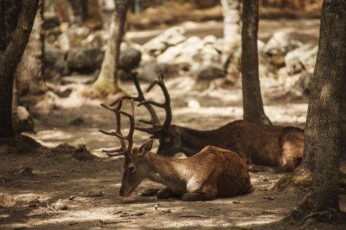 deer lavirian dump
