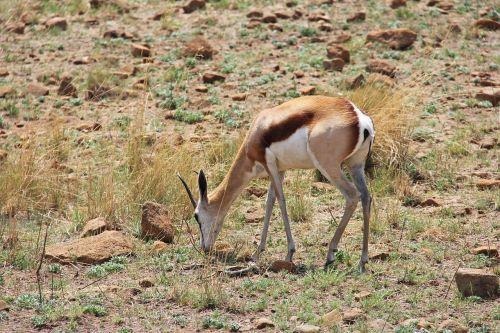 deer exciting adventure