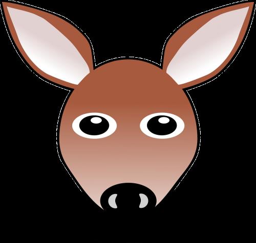 deer doe roe