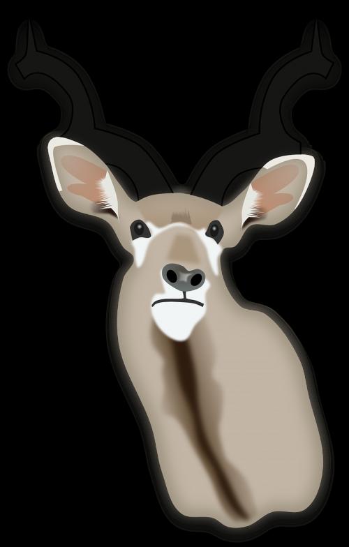 deer animal africa