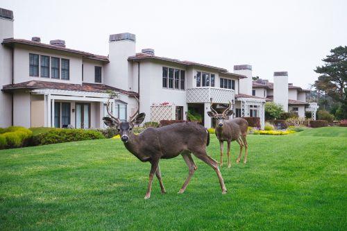 deer animal grass