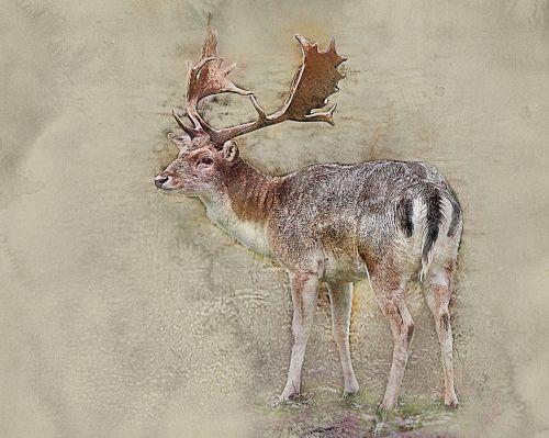 deer fawn parnokopytnyj