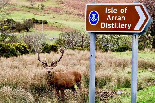 deer scotland surprise
