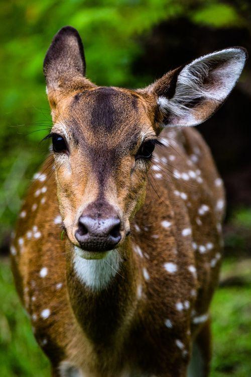 deer animals wildlife