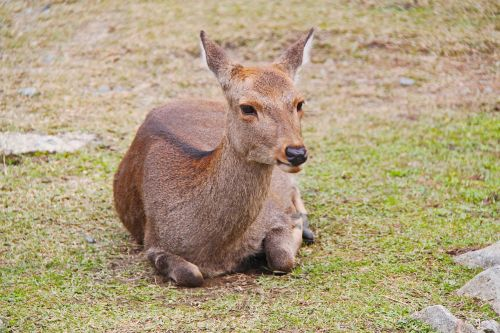 deer beautiful mammal