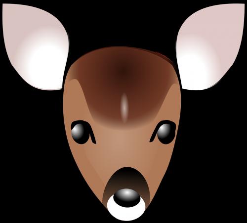 deer fawn face