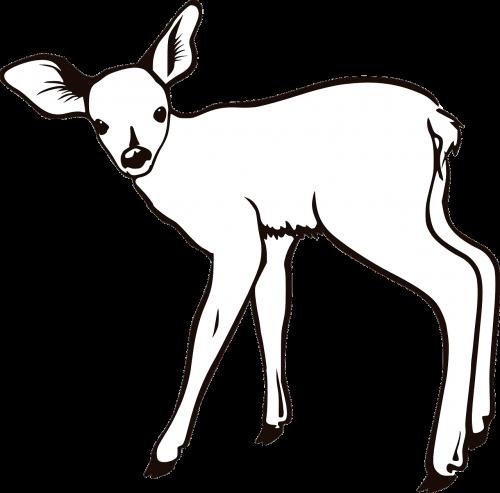 deer animal white