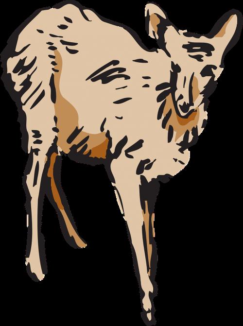 deer animal mammal
