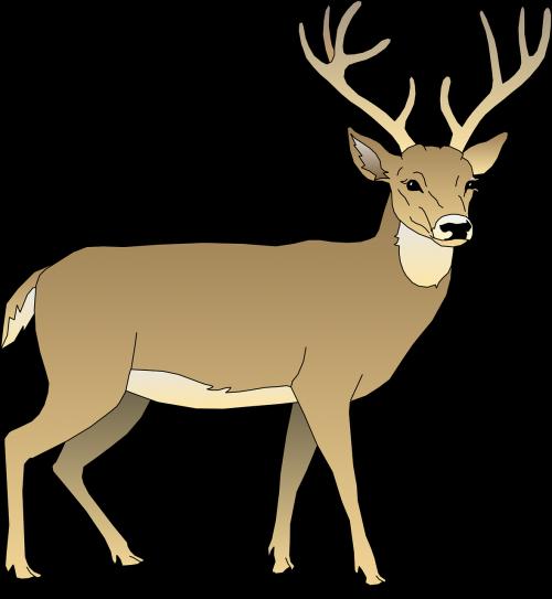 deer male animal