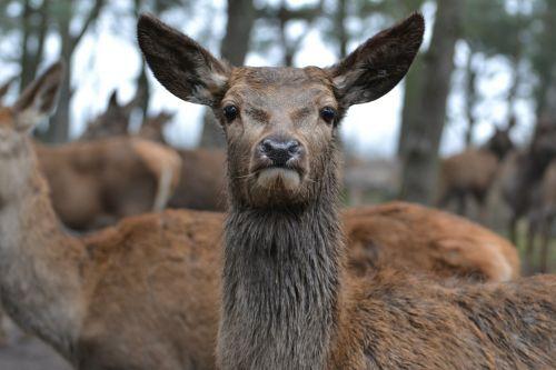 deer zoo mammal
