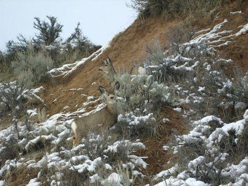 deer camouflage nature