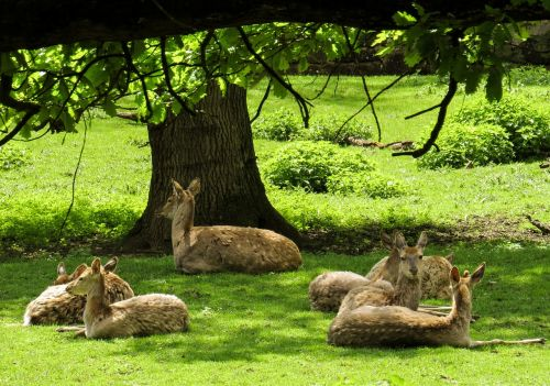 deer forest rest