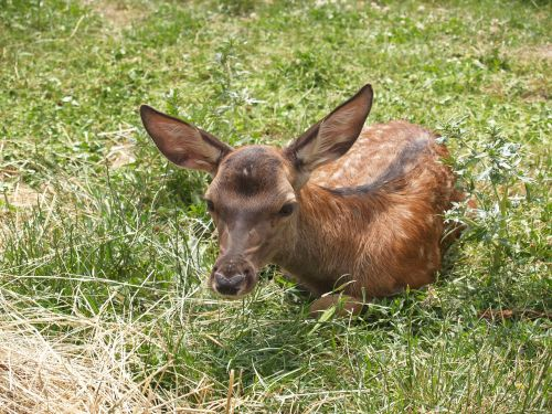 deer green kid
