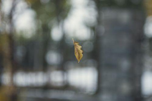 defoliation autumn ppt backgrounds