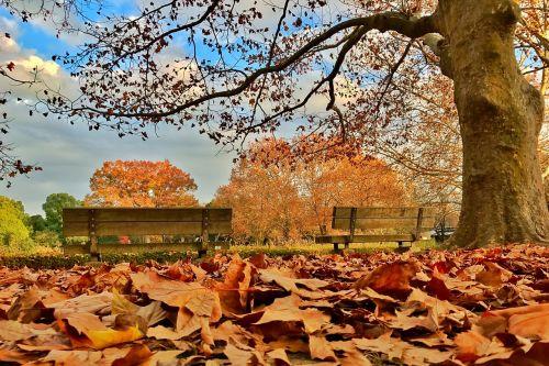 defoliation autumn yellow