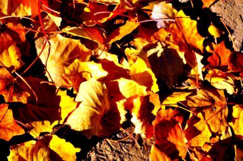 defoliation ground autumn