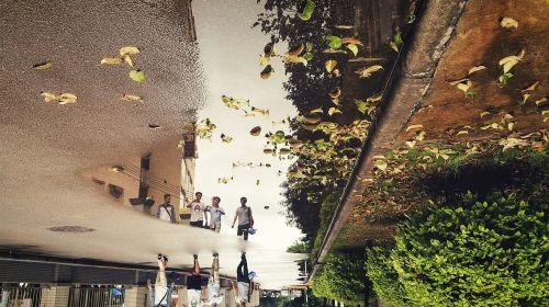defoliation rain reflection