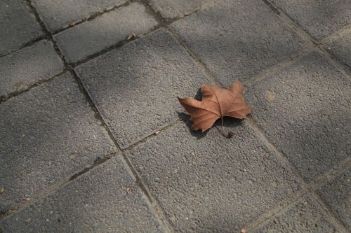 defoliation ground sad