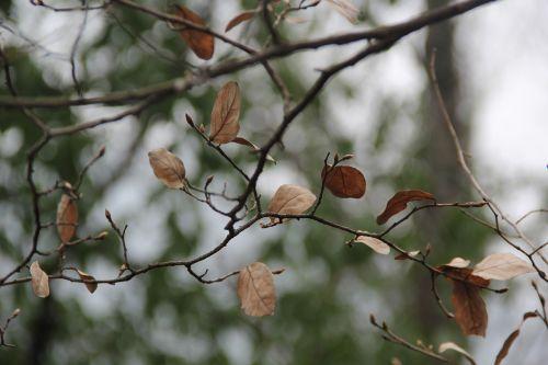 defoliation deadwood blur