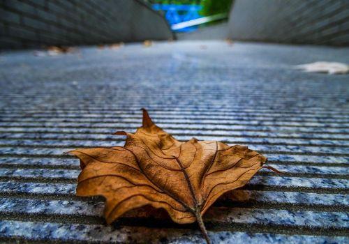 defoliation autumn leaf