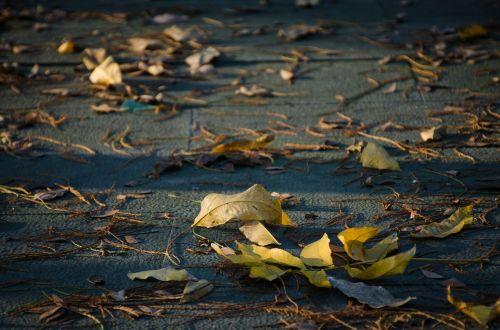 defoliation the leaves ground