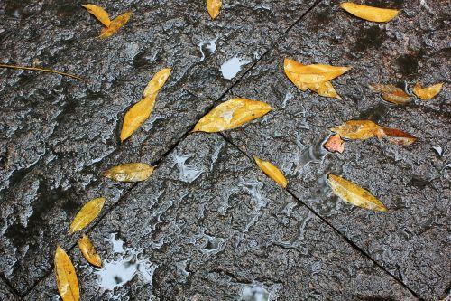 defoliation ground rain