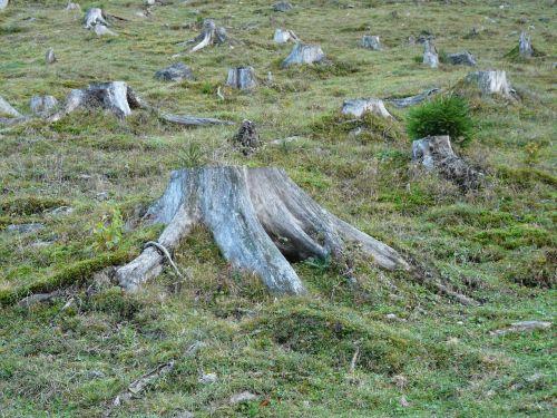 deforestation forest tree stump