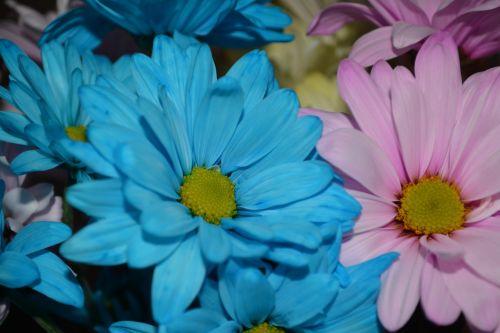 Delicate Daisy Flora Arrangements