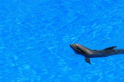delfin water pool