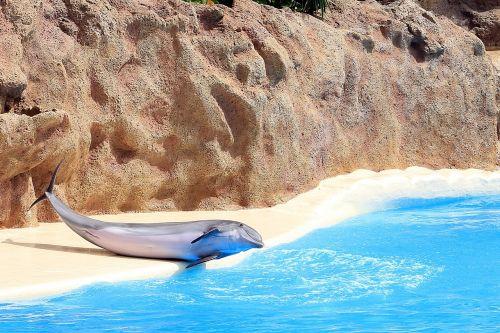 delfin dolphinarium fins