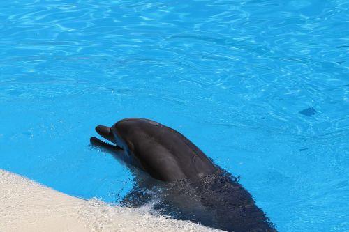 delfin dolphinarium mammal