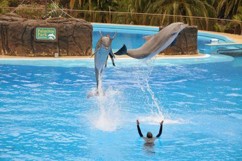 delfin preview blue