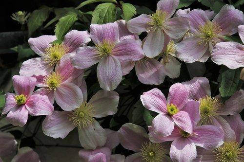 delicate flowers  romantic  pink